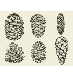 Pine cones of cedar spruce fir christmas tree vector