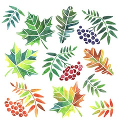 Watercolor leaves vector image