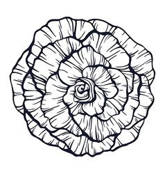 Outline rose vector