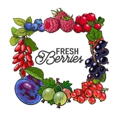 Square frame of garden berries with place for text vector