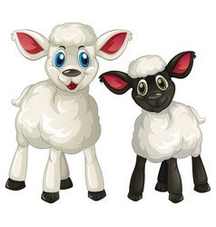 Two little lambs on white background vector
