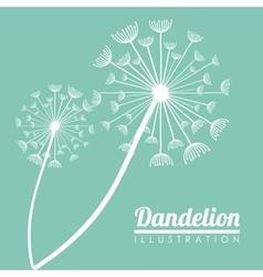 White Dandelion plant design vector image