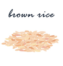 brown rice healthy food high fiber vector image vector image