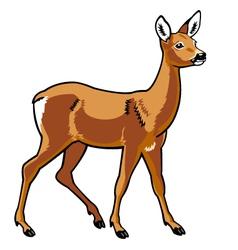 roe deer vector image