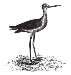 Stilt vintage engraving vector image