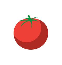 tomato vegetable icon image vector image