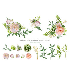 Elements bouquets collection of pink white garden vector