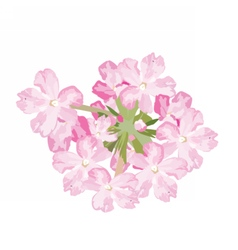 Pink flowers bouquet isolated vector image vector image