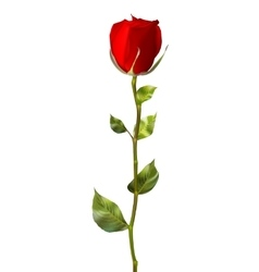 Single red rose isolated on white eps 10 vector