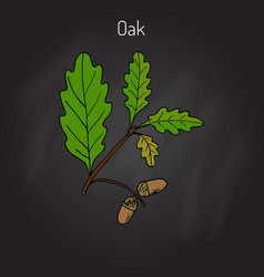 oak branch with green leaves and acorns vector image vector image