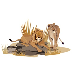 African lions vector