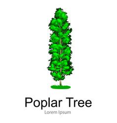 Cartoon isolated poplar summer tree on a white vector