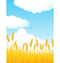 Field of corn against a blue sky with fluffly clou vector