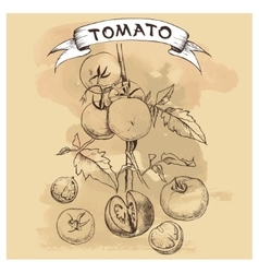 set of tomatoes for design vector image
