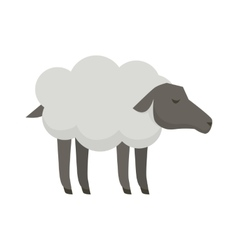 Sheep flat design on white vector