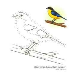 Blue winged mountain tanager draw vector image