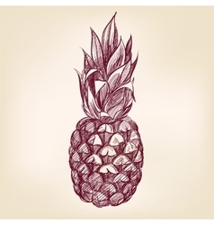 Fruit pineappl hand drawn llustration vector