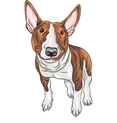 Bull terrier dog breed vector