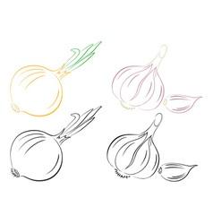garlic and onions vector image vector image