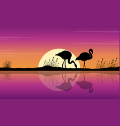 Collection of flamingo on lake scene silhouettes vector