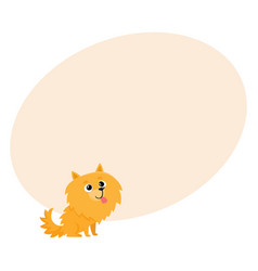 Cute little long haired pomeranian spitz dog vector