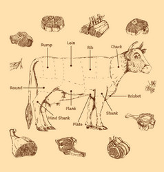 meat hand drawn scheme vector image