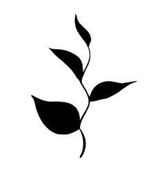 Silhouette branch of tea with leaves vector