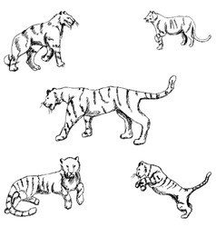 Tigers a sketch by hand pencil drawing vector