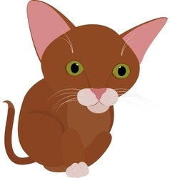 Funny brown cat with big green eyes isolated on vector