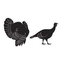 bird turkey vector image