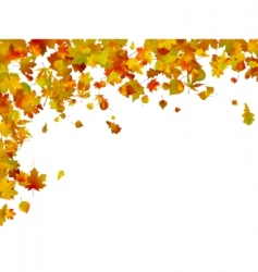 Background of autumn leaves vector