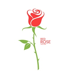 Rose red flower on white background vector