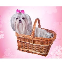 Cute shih tzu dog with pink bow sitting in basket vector
