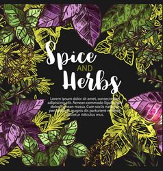 Spices and herbs farm store poster vector