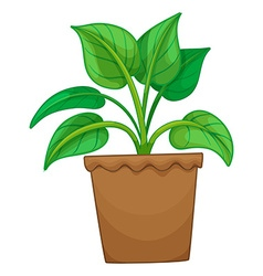 Green plant in the pot vector