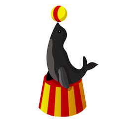 the circus seal vector image vector image