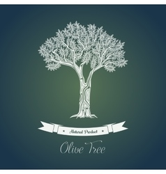 Ancient greek olive oil tree in grove vector
