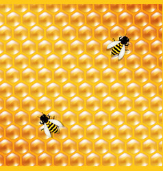 honey background and bee vector image