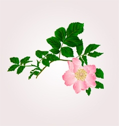 Eglantine twig with leaves and flower of wild rose vector