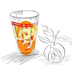 glass of fresh mandarin juice vector image vector image