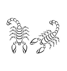 scorpio outline vector image
