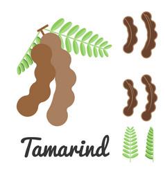 Tamarind flat design vector