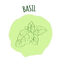 Basil branch vector