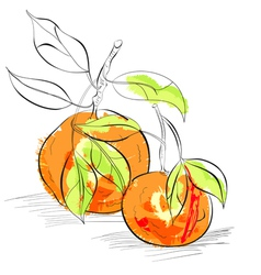 mandarin vector image vector image