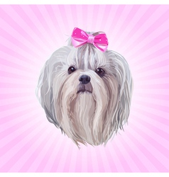 Shih tzu dog portrait vector