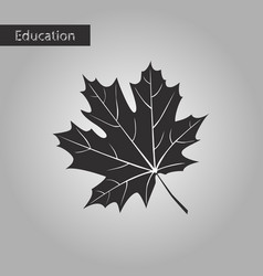 black and white style icon maple leaf vector image