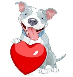 Valentine Pit Bull Dog vector image
