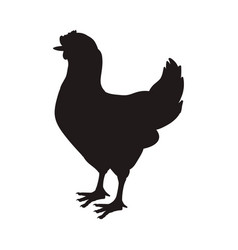 chicken farm animal vector image vector image