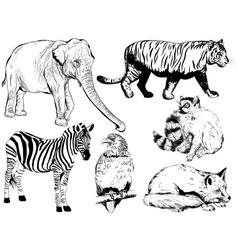 set of wild animal vector image vector image