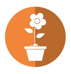 pot flower garden shadow vector image